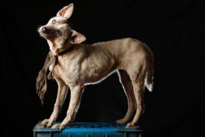 venezuela-dogs-4