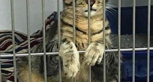 Sad cat Vincent