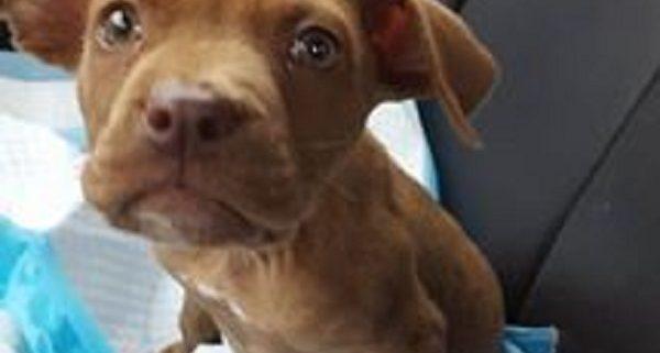 Injured pup found in mud pit