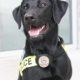 Police Canine Diego