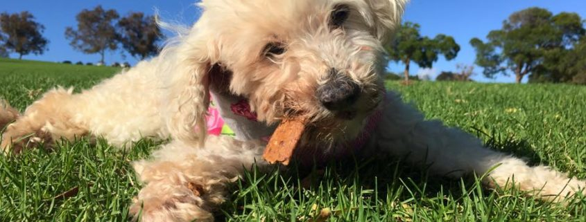 16-year-old dog rescued