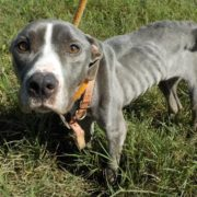Emaciated dog abandoned in Delaware