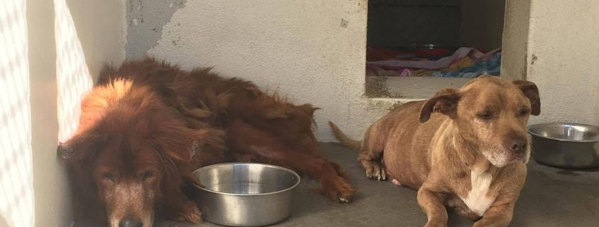 Two very old dogs surrendered