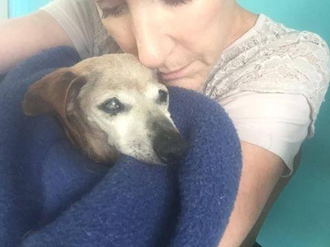 Owner surrendered dog
