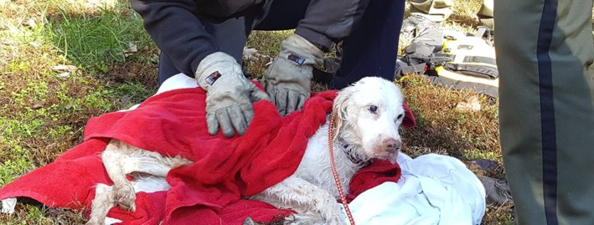 15 yr old, blind and deaf dog rescued from pond