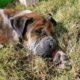 Three-legged dog left to die