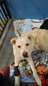 bright-eyes-dog-rescue-4