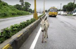 donkey-hit-by-car-2