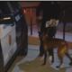 Police dog stabbed