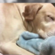 Dog shot and killed during break in