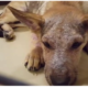 Pitiful puppy owner surrendered