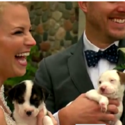 Couple chooses puppies for wedding photos