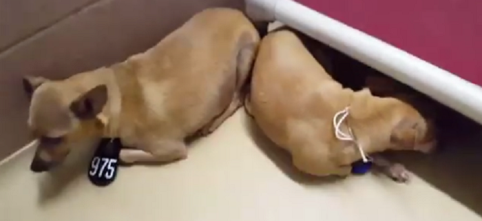 Dogs in fear after being surrendered