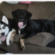 Two dogs killed in violent home break-in