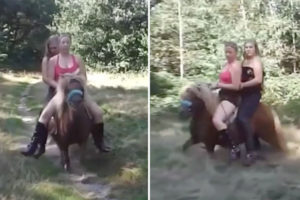shetland-pony-abused