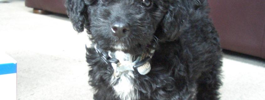 Teen accused of breaking puppy's neck