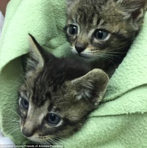 will-and-grace-kittens-2