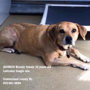 Senior dog homeless after hurricane