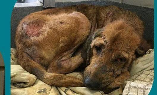 Gentle Death Row Dog