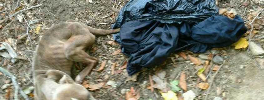 Skeletal dog found discarded in trash bag