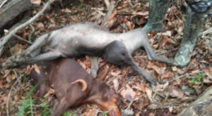 Man claims that hunter killed his 2 dogs