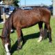 Man facing cruelty charges for riding horse nearly 700 miles