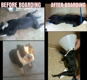 Luciano before and after his boarding