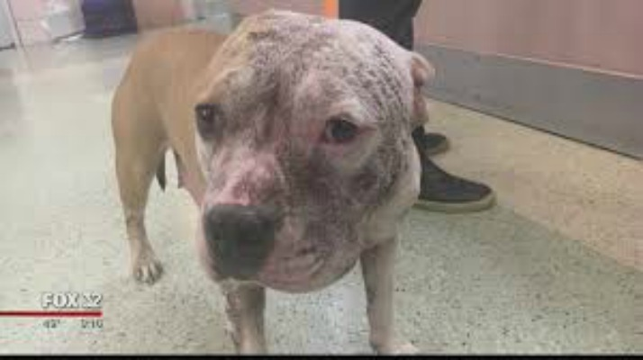 Chicago Animal Control Adoptable Dogs