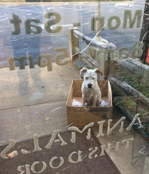 Emaciated Pup Waits In Cardboard Box At Shelter Where He