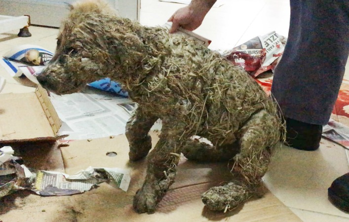 Resultado de imagen para pascal dog