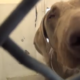 Blind dog surrendered to busy animal control