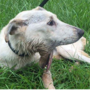 Man accused of neglecting dog found not guilty