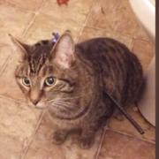 Cat shot with an arrow