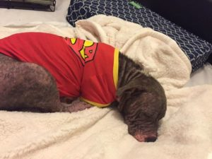 serenity-the-dog-sleeping