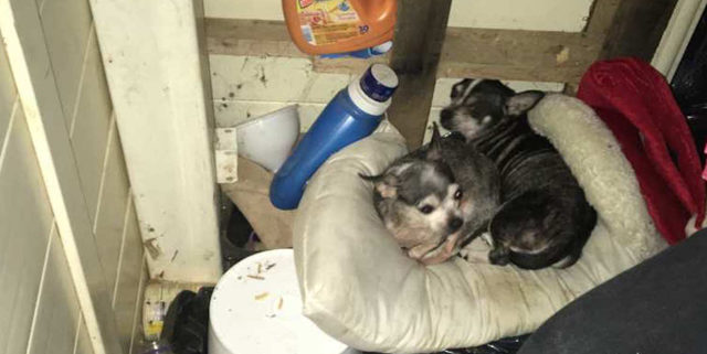 Over 50 dogs rescued from house fire