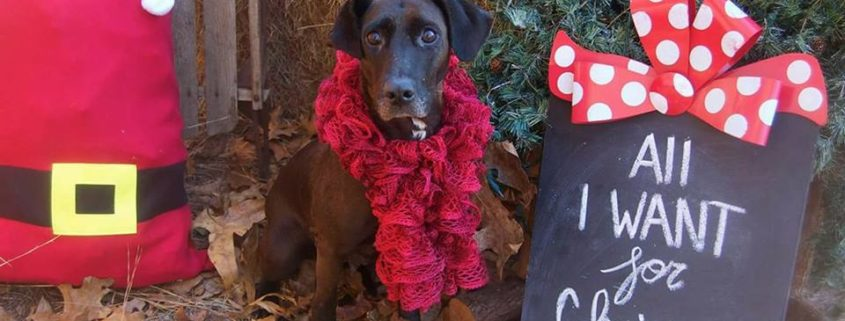 Dog rescued from hoarding situation needs a home