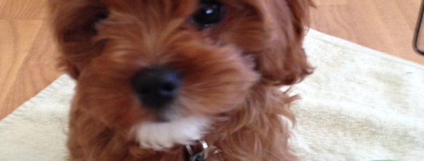 Puppy stolen