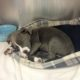 Puppy ingested heroin