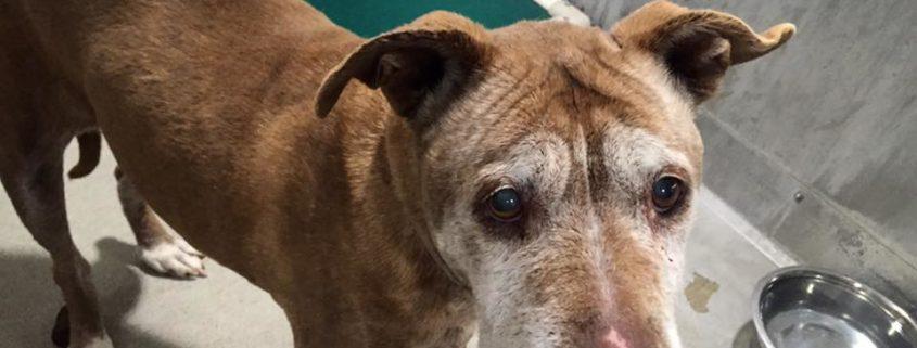 No one has claimed senior dog at animal control