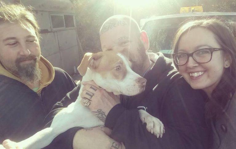 Paralyzed dog rescued