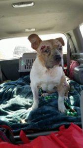 good-karma-dog-rescue