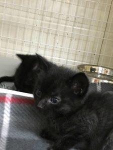 homeless-animal-adoption-league