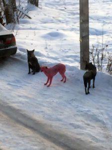 pink-dog-2