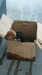 puppies-at-carwash-2