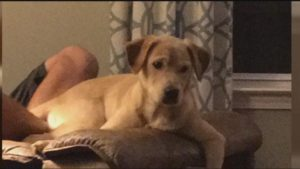 puppy-shot-and-killed2