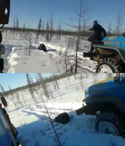 russians-drive-truck-over-bear