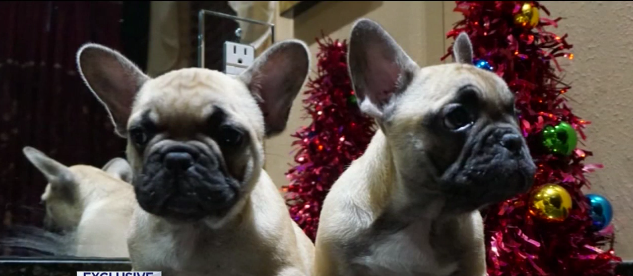 Puppies stolen in armed robbery