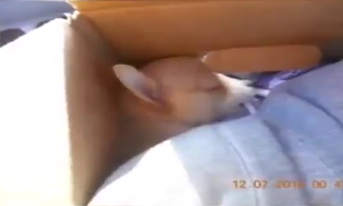 Abandoned puppy found in box