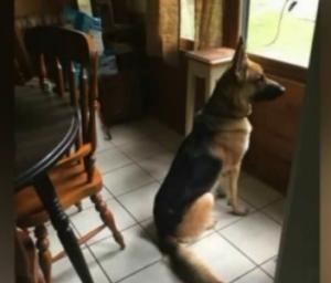 Hero dog Zeus
