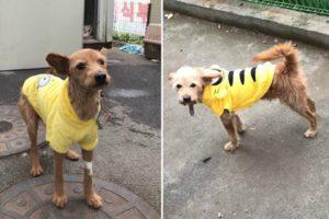 thai-airways-dog-killed-dog-cover